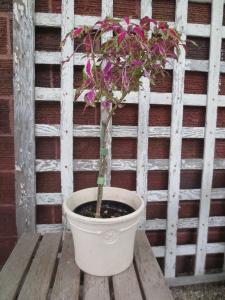 David's  Perennial Gardening 708.516.0249