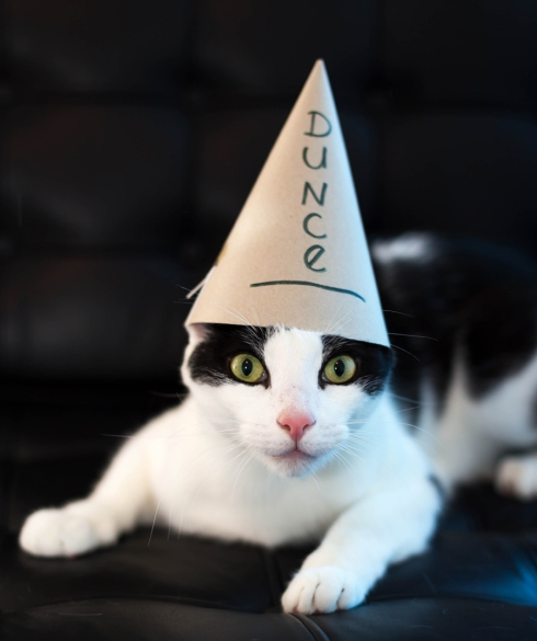dunce cap cat