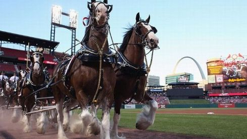 clydesdales at ballpark
