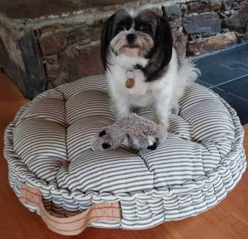 french mattress striped dog bed