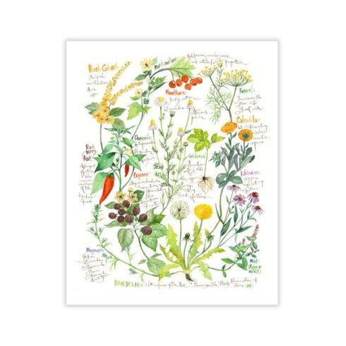botanical medicinal plant print - lucile