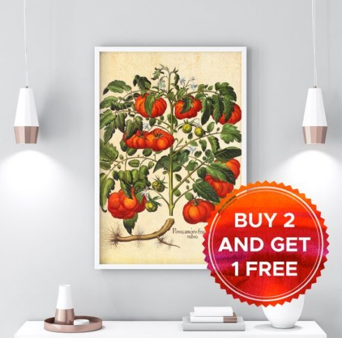 botanical print tomato