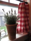 curtains -- kitchen red gingham